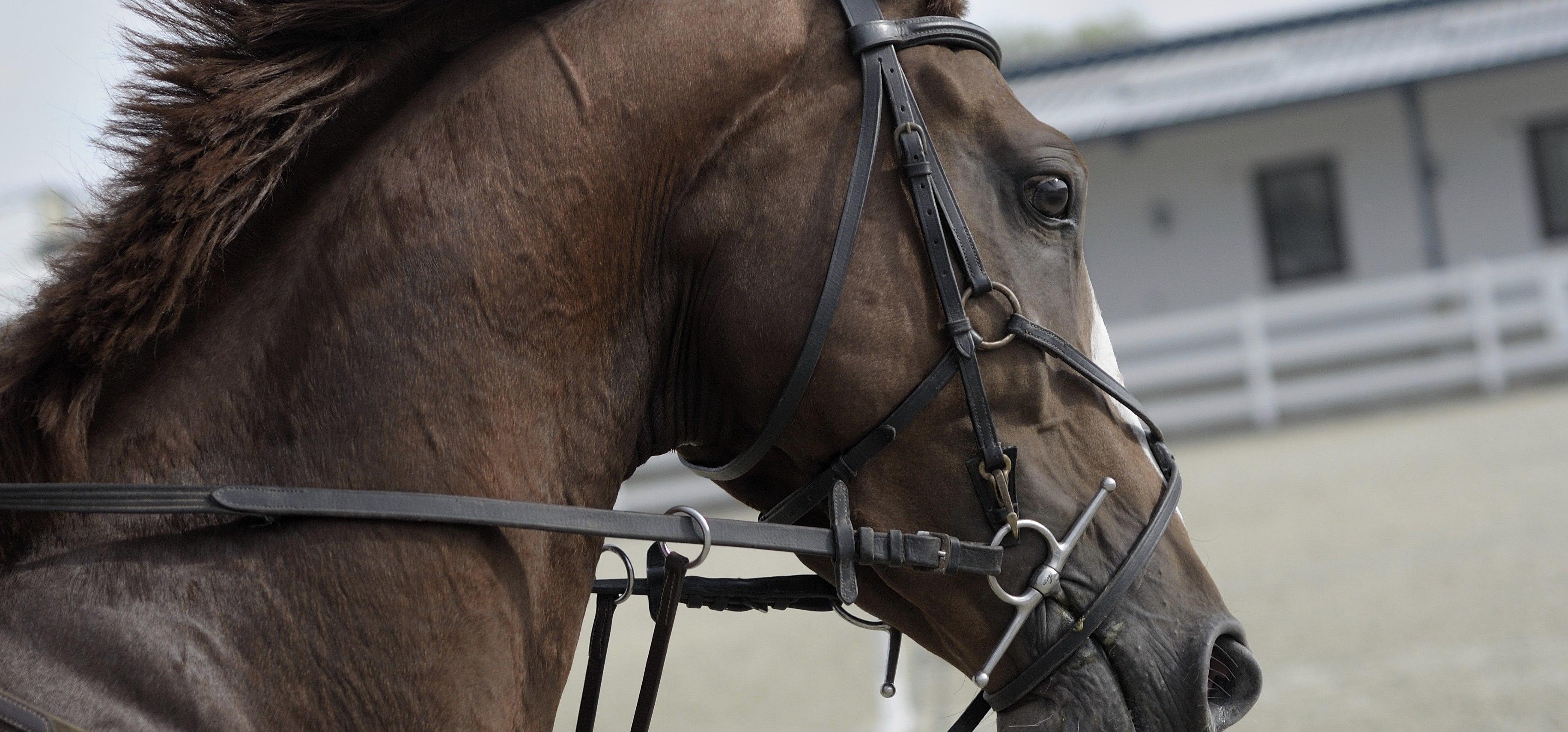Stress du cheval