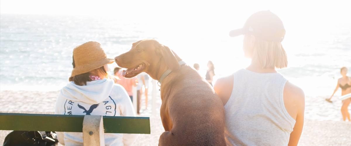 Réduire le stress de votre animal de compagnie lors du départ en vacances