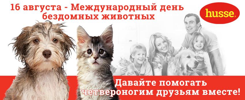 16 августа - Международный день бездомных животных!