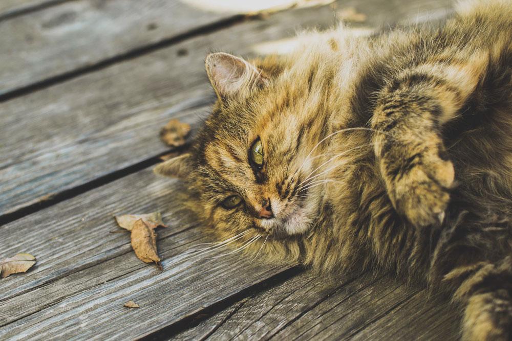 Cani e Gatti grassi: come prevenire l'obesità