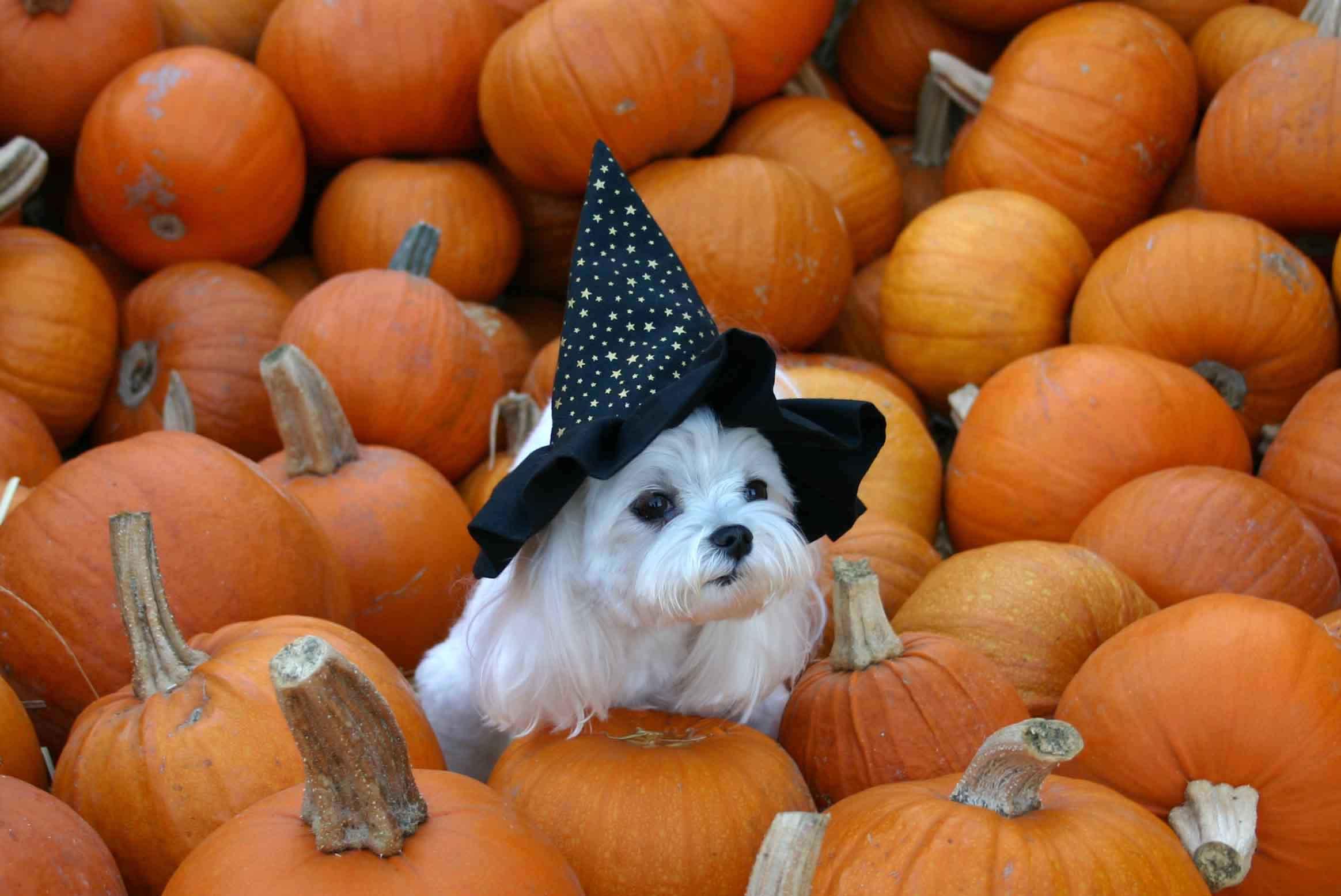5 fonti di stress per il tuo cane e il tuo gatto durante la notte di Halloween