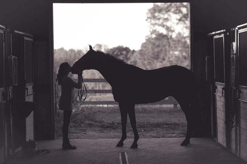 ¿Cómo cuidar la cola del caballo?