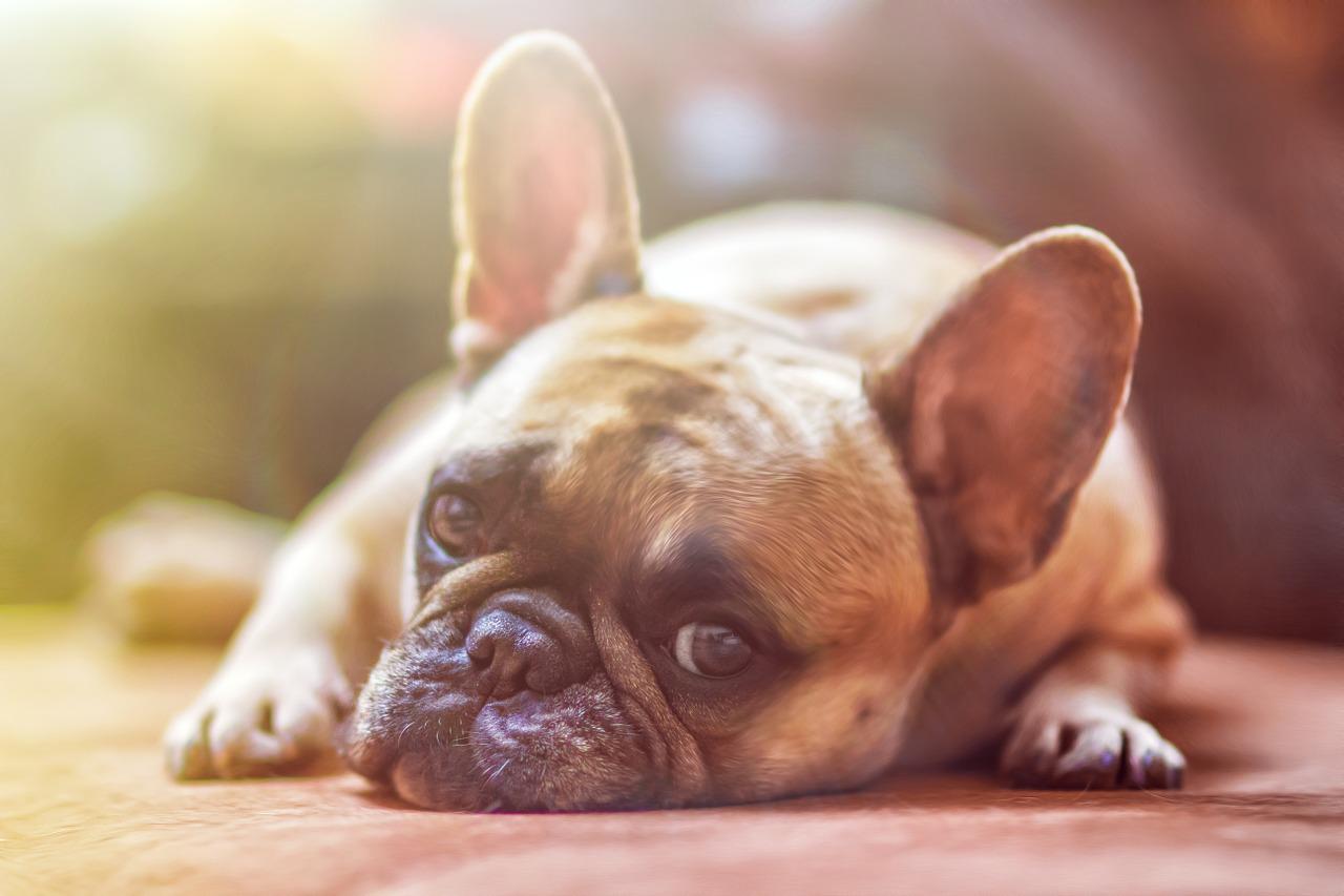 El golpe de calor en tus mascotas