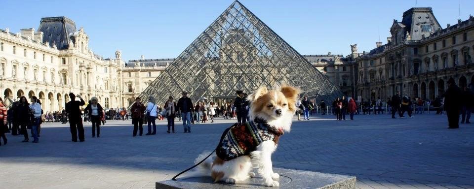 TOP 10 DOG OWNERSHIP PER CAPITA IN EUROPE
