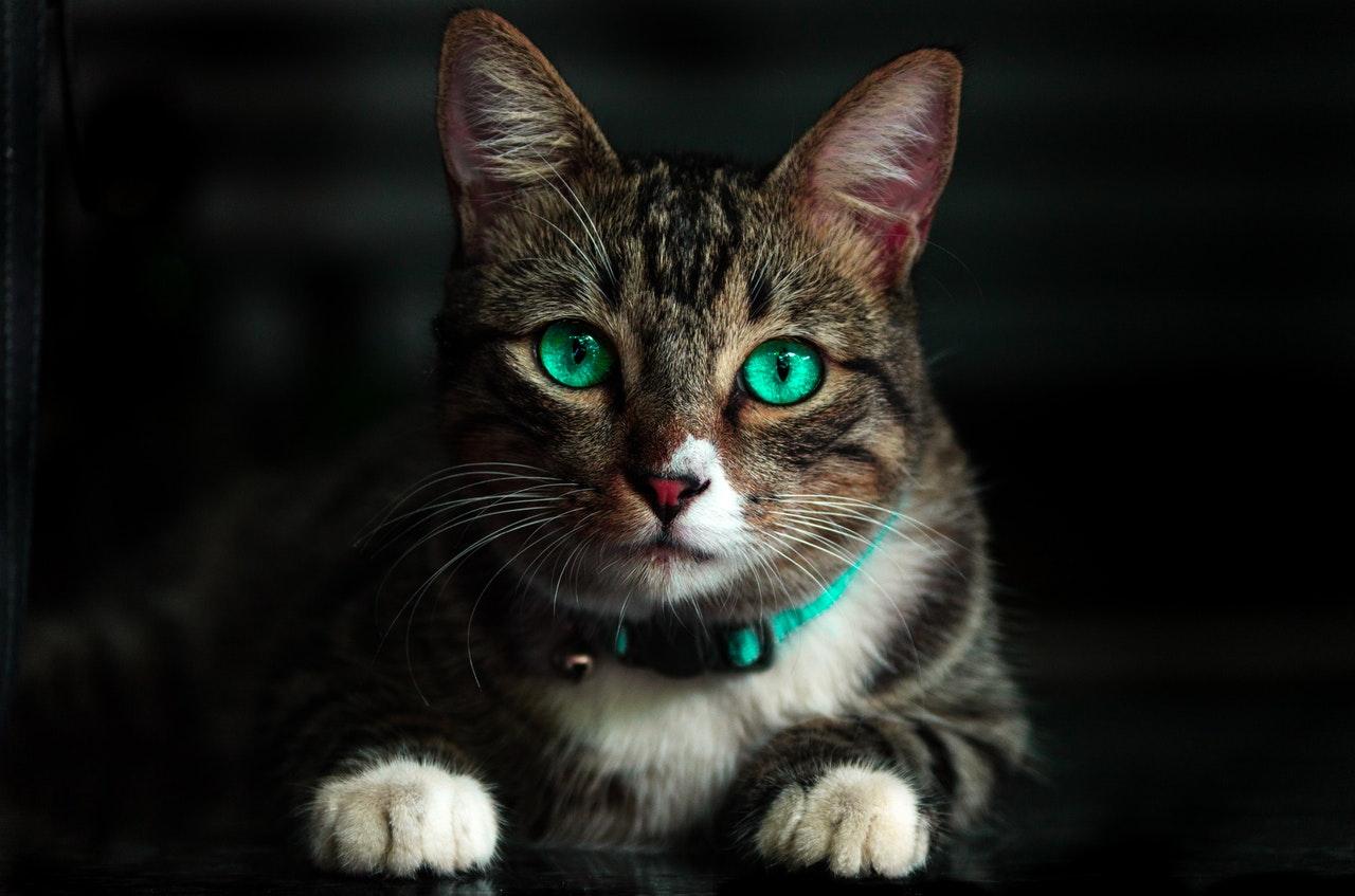 Exclusive Sterilised: pienso para gatos esterilizados