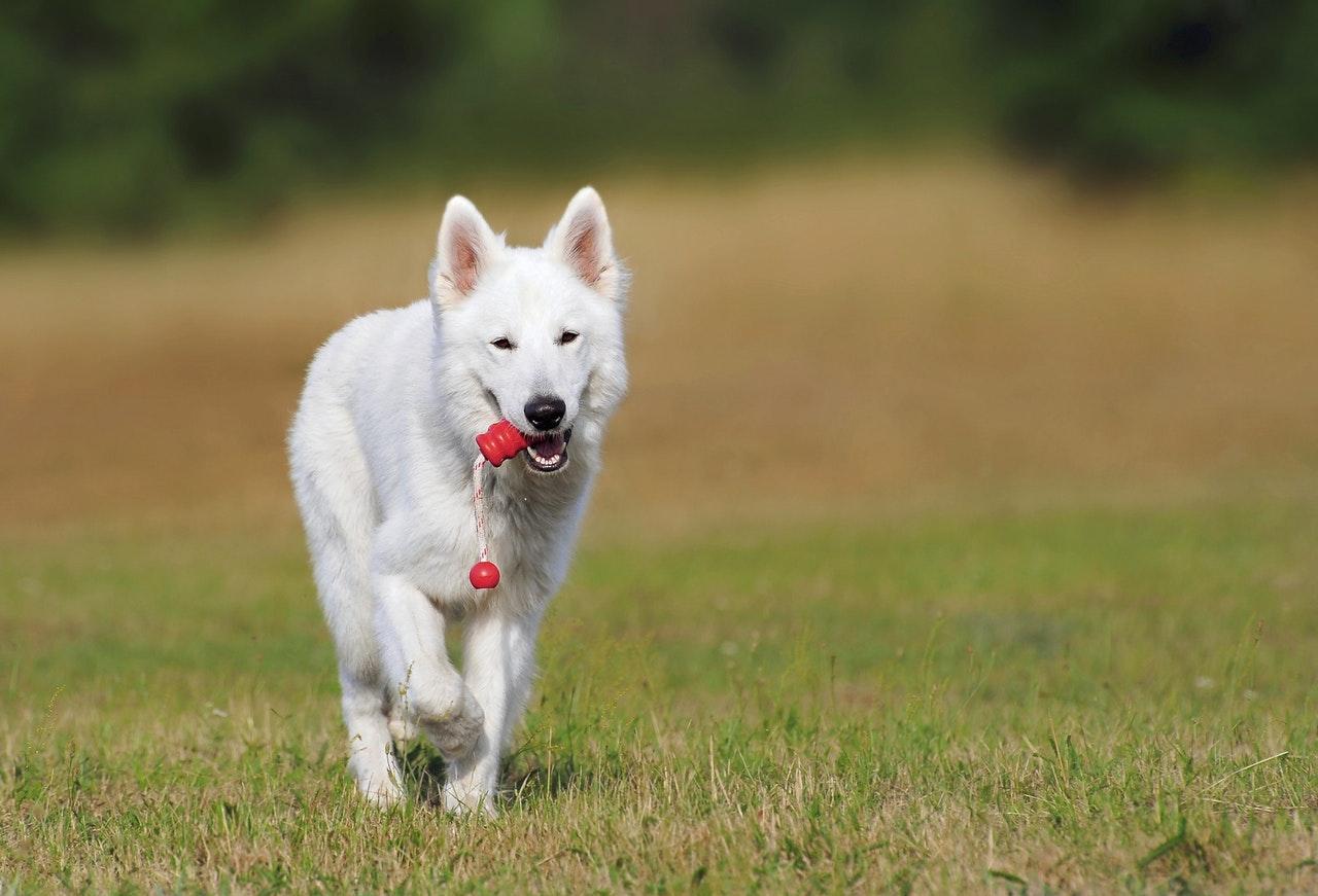 Selección de juguetes para perros