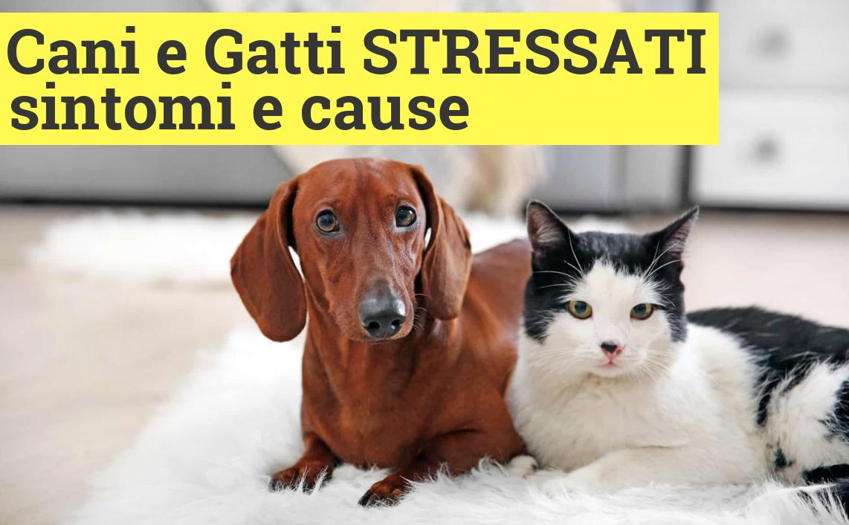 I sintomi dello stress: come prenderti cura del tuo cane e gatto