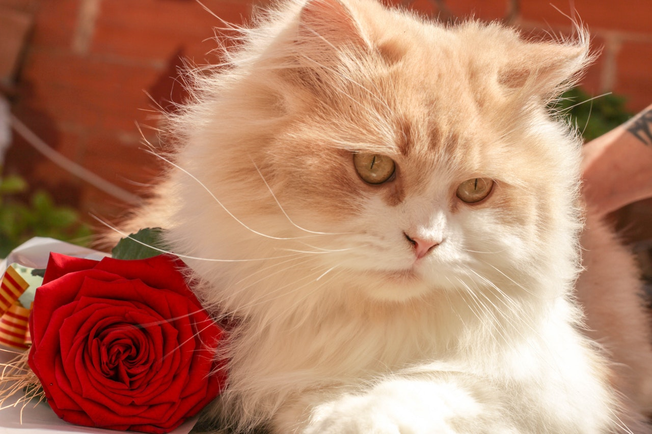 Suplementos para el pelo y la piel del gato