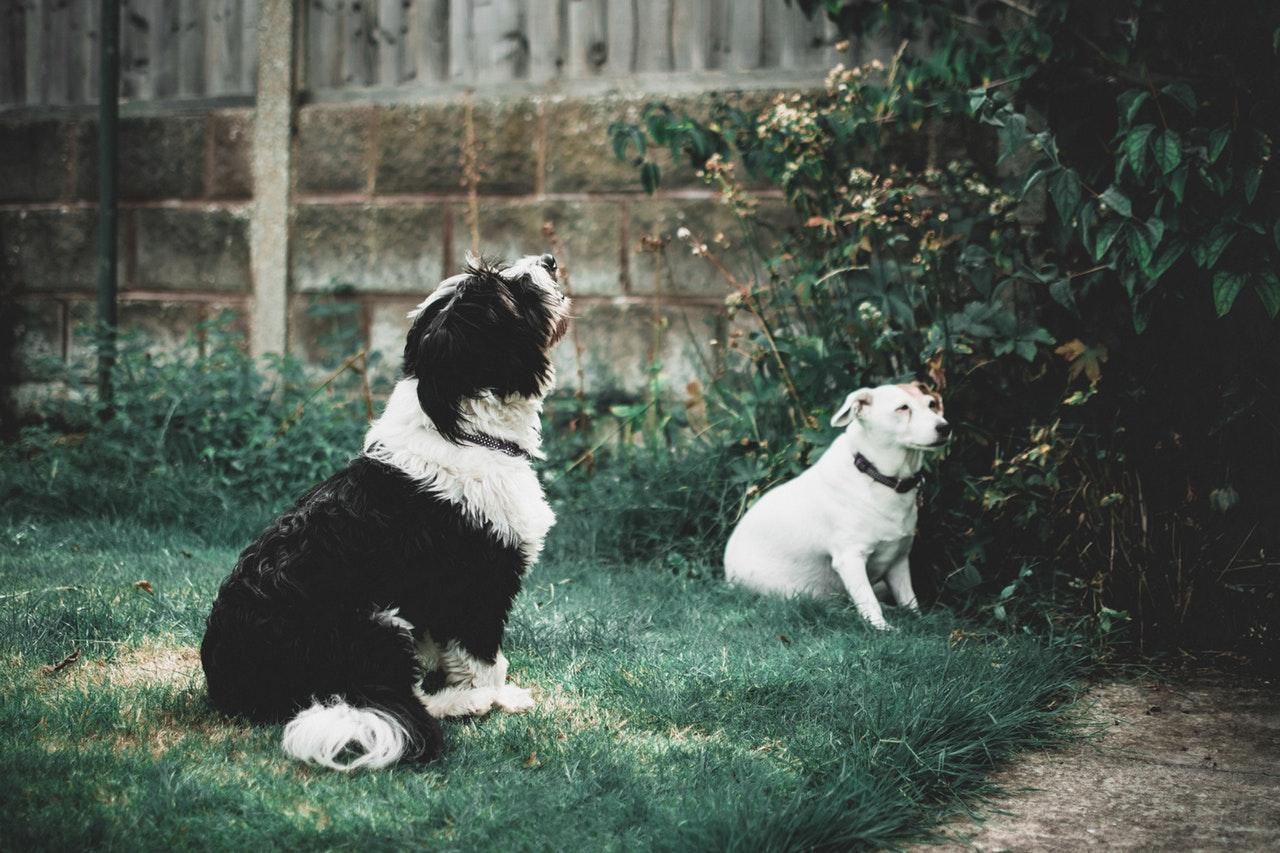 Suplementos calmantes para tus mascotas