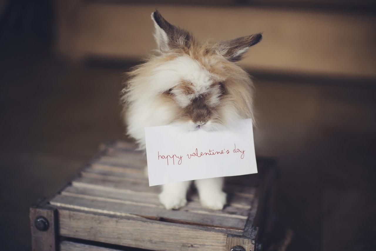 Regalos de San Valentín para tus mascotas