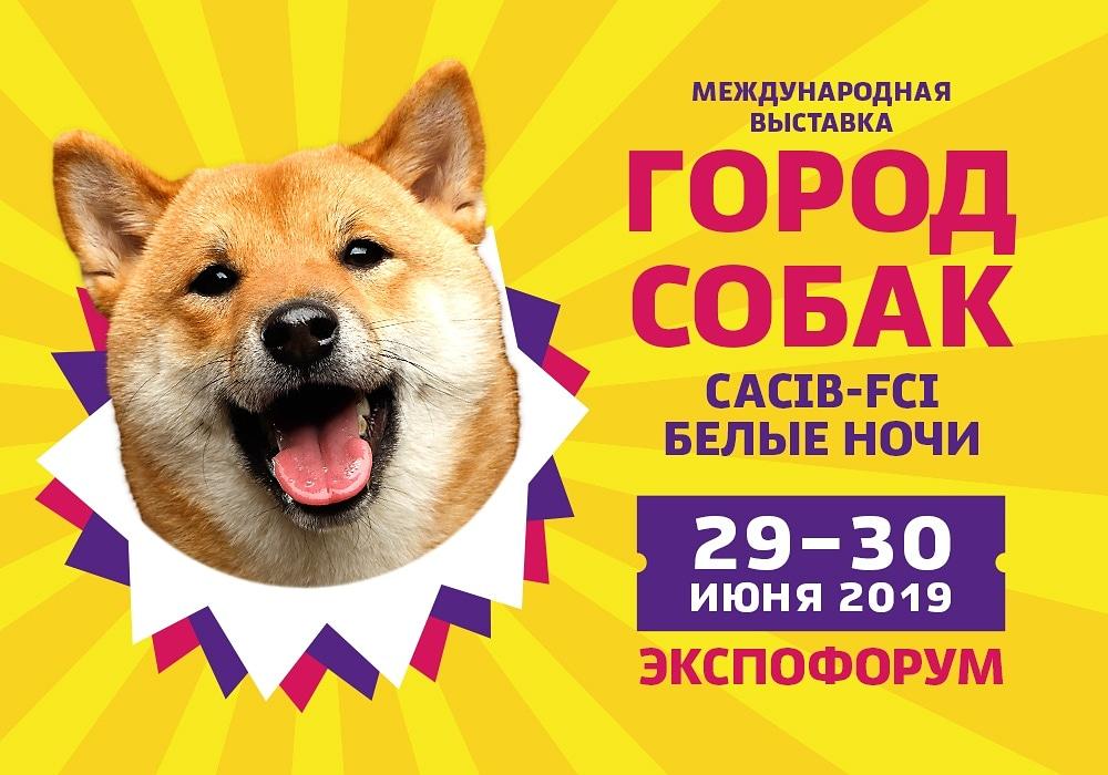 Город собак 2019