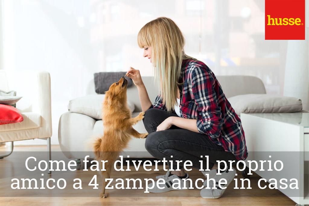 Come far divertire il proprio cane anche in casa
