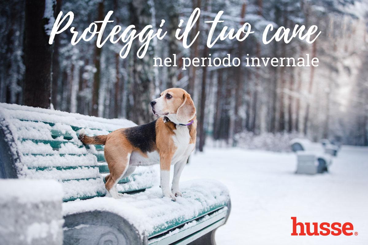 Proteggi il tuo cane nel periodo invernale