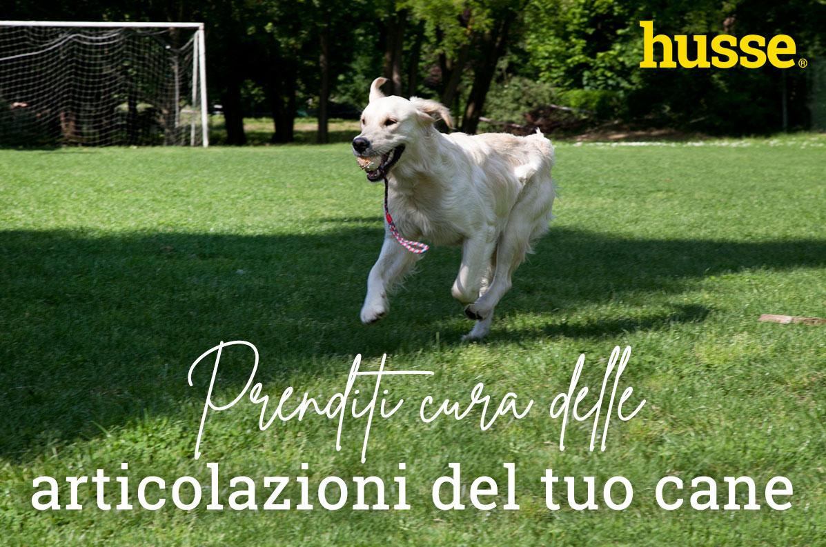 Prenditi cura delle articolazioni del tuo cane