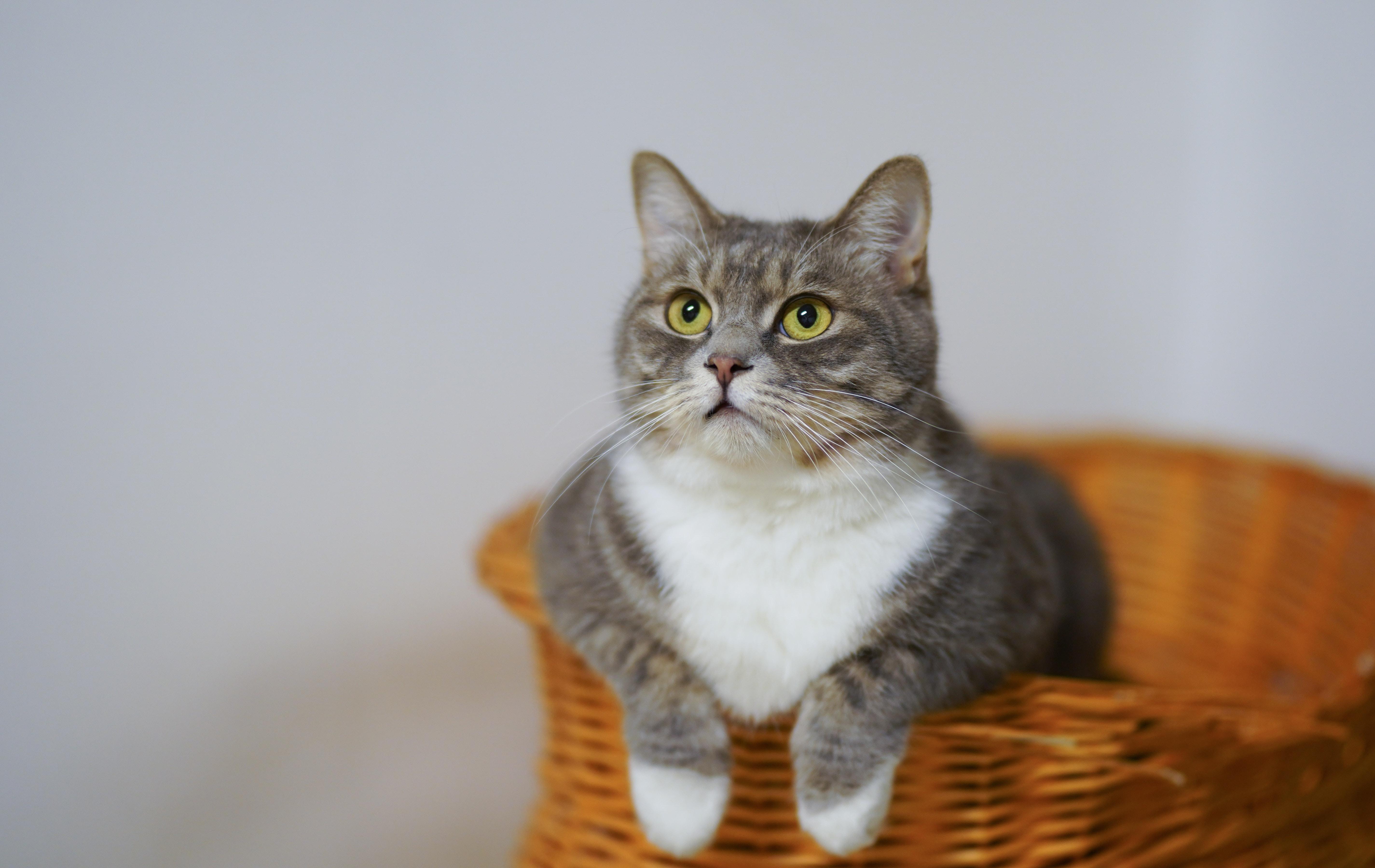 «Цікавинки» у складі кормів для котів