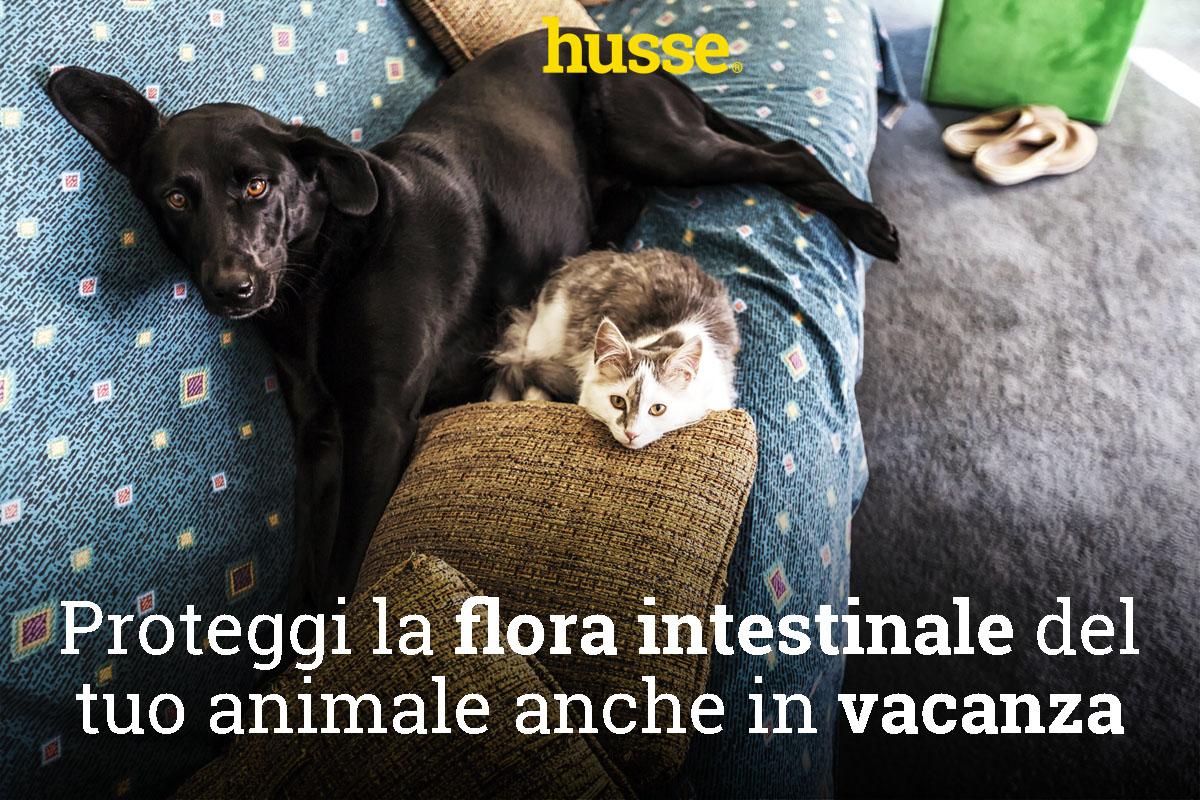 Proteggi la flora intestinale del tuo animale anche in vacanza