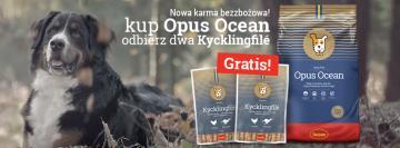 Nowość! Bezzbożowa karma Husse Opus Ocean dla psów.
