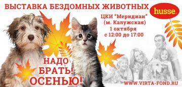 Приглашаем всех на выставку бездомных животных 1 октября!