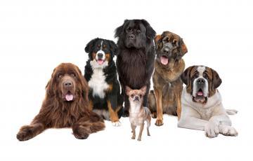Приглашаем всех на Национальную выставку собак всех пород