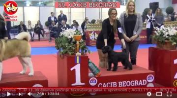 Video from Dog Show in Belgrade made by Husse Serbia