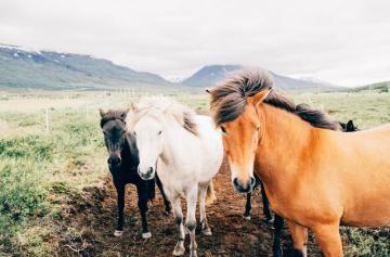 Suplementos para caballos ¿cuándo son necesarios?