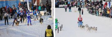 Husse participated in Dog Race in Perm, Russia