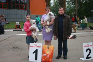 Региональная выставка собак все пород ранга САС КЧФ в Наро-Фоминске!