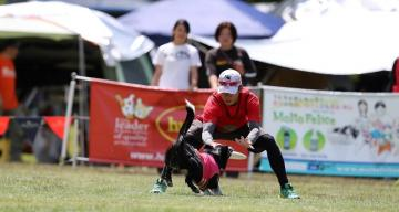 NATIONAL DISC DOG CHAMPIONSHIPS IN JAPAN
