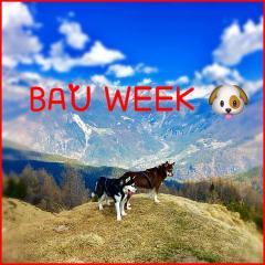 Dal 21 al 27 agosto - Bau Week con Wolf Fit Sondrio