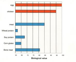 What is the biological value of proteins? Which protein sources have the best biological value?