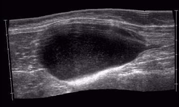 Feline Lower Urinary Tract Disease. (FLUTD)