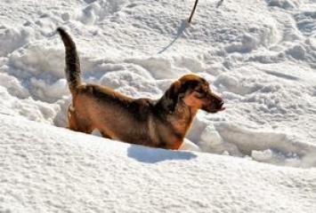 Caring for Pet's Paws in winter