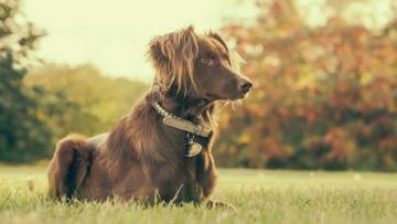 Champús antiparásitos para perros