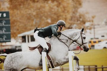 Glans, nuevo desenredante para caballos