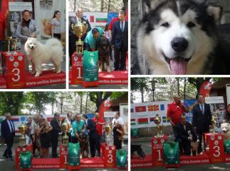 HUSSE PARTICIPATED IN THE INTERNATIONAL DOG SHOW IN SERBIA