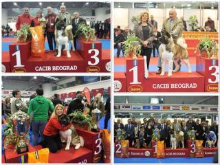 HUSSE TOOK PART IN DOG SHOW IN SERBIA