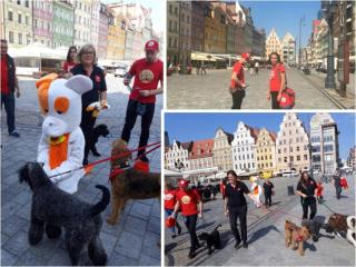 HUSSE DISTRIBUTORS FROM POLAND TOOK A WALK WITH DOGS IN THE CENTRE OF WROCLAW CITY