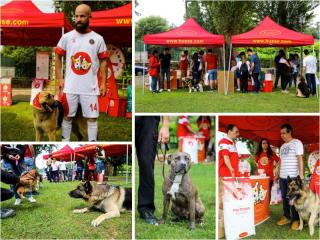 HUSSE TOOK PART IN DOG EVENT IN PORTUGAL