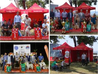HUSSE ATTENDED FEW DOG SHOWS IN SERBIA