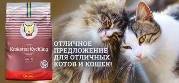 Отличное предложение для котов и кошек!