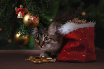 Cuidar de tus mascotas en Navidad