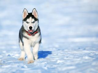 Alimentar a tu perro en invierno