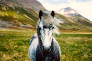 Suplementos para la piel del caballo