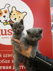 Выставка кошек 29 сентября
