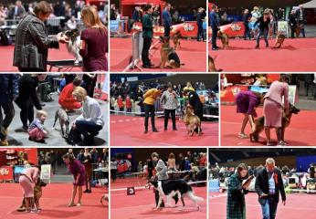 HUSSE TOOK PART IN DOG SHOW IN LITHUANIA
