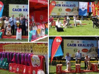 HUSSE ATTENDED SEVERAL DOG SHOWS IN SERBIA