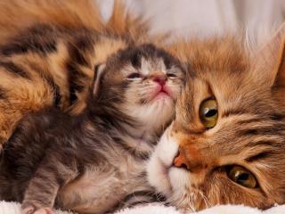 Ждем любителей кошек