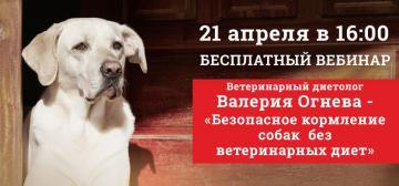 Приглашаем на бесплатный вебинар «Безопасное кормление собак без ветеринарных диет»