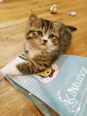 Кормление растущих котят - избегайте