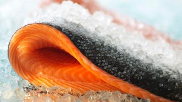 ¿Cuál es la función de omega-6 y omega-3? ¿Cuál es la mejor fuente de omega-3 para mascotas?